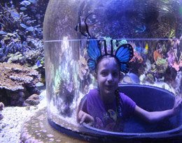 Butterfly House & Aquarium